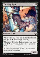 x4 Thriving Rats MTG Kaladesh M/NM, English