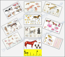 DOLLSHOUSE Mini Vets Veterinary Animal Anatomy Picture SET  - CDHM 1:12
