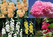 100+ Samen Alcea rosea Charters Double - Stockrosen gefüllt , Farben-Mix