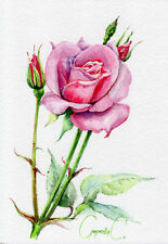 Rose, flower, pink, green, Watercolor Original Painting from the Artist