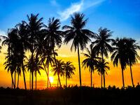 VLIES Fototapete-PALM TREES-(389V)-350x260cm-7Bahnen 50x260-Palmen Meer Sonne