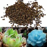 150 × Blau Sukkulente Samen Lithops Seltene Kaktus Deko Hausgarten Pflanzen V0V4