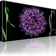 Sternkugel Blume Bild auf Leinwand. Mit Keilrahmen! XL