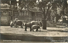 Berlin, Zoologischer Garten, Tierpark, Elefant, alte Foto-Ansichtskarte um 1930
