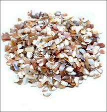 Natural Colors Large Crushed Shell Chip Embellishments (350)