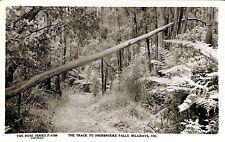 AUSTRALIA Victoria The Track to Sherbrooke Flls. Belgrave Rose Series P. 4788