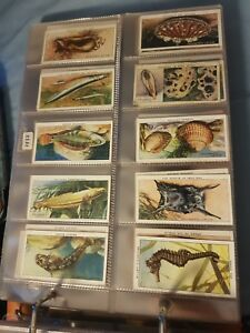 The Sea-Shore (1938) - Wills Cigarette Cards - Buy 2 & Save