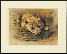 CAIRN TERRIER CUTE DOG IN A BASKET LOVELY DOG PRINT MOUNTED READY TO FRAME