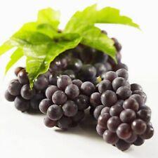 1 Pack 50 Black Grape Fruit Seeds DIY Balcony Plants Delicious Planting S088