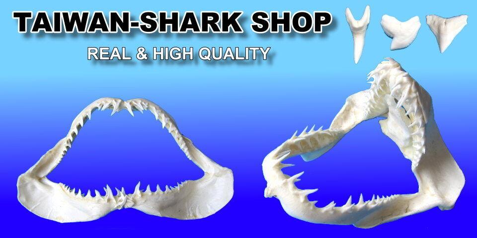 taiwan-sharkshop