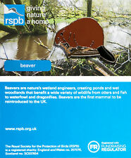RSPB Pin Badge | Beaver | Illustrated card [01298]