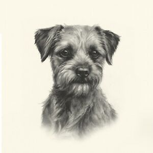 Dog Show Ring Number Clip Pin Breed - Border Terrier