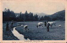 CARTOLINA DI CALIZZANO SAVONA - PASCOLO RIO NERO - 1933  C6-335