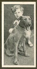 1936 Uk Dog & Friend Child Photo Ritson Carreras Cigarette Card Irish Terrier