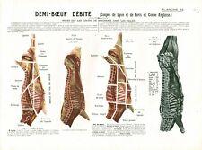 Cabinet de curiosité 1906 anatomie du bœuf planche ancienne n°12