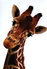 Ansichtskarte: kleine Giraffe - wunderschönes Porträt