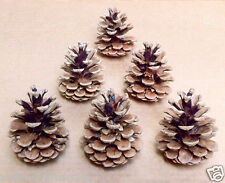 15 Medium Size Austrian Pine Cones For Arts and Crafts Projects