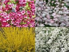 Vierjahreszeiten Hecke 4 Stück Zierträucher Blütensträucher Sichtschutz Blüte