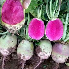 500 pcs Red flesh radish vegetable seeds