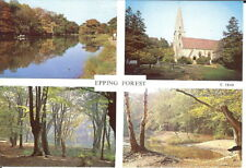 Essex: Epping Forest Multiview - Unposted c.1980's