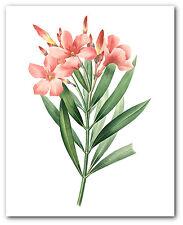 Flower Print, Botanical Laurier Rose Art, 8 x 10 Inches, Unframed