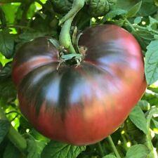 50 Organic Cherokee Purple Tomato Seeds Heirloom Fresh Non GMO 2020 Seed