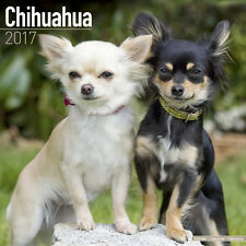 "Chihuahua 2017 Wall Calendar by Avonside (12"" x 24"" when opened)"