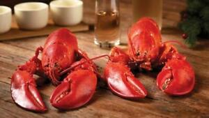 Get Maine Lobster - 15 Live Maine Lobsters (1.1-1.2lb each) w/ FREE SHIPPING