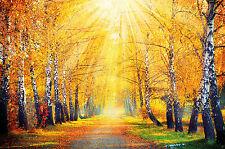 Herbst Fototapete  herbstlicher Wald Wandbild für das Wohnzimmer  Great Art