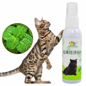 Catnip Mist Spray for Pet Kitten Cat Healthy Fresh Mint Training Scratchers Toys