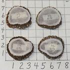 4 #1 LG Elk Antler Rosettes Burrs Belt Buckles Bolos Crafts