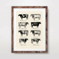 VINTAGE COW BREEDS FARM ANIMAL CHART ART PRINT Agriculture Poster Wall Picture