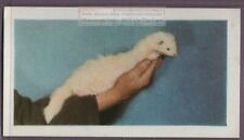 How To Care For Your Pet Ferret Vintage Trade Card