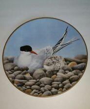 Waterbird Plate by Danbury Mint Tern by Eric Tenney