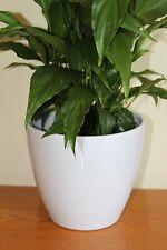 Quality White Rigid Plastic Plant Pot Cover-Diameter 13cms