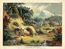 "1886 KENNGOTT/ROLLE CHROMO Pleistocene ""Ice Age"": cavemen, mammoth, cave bear"