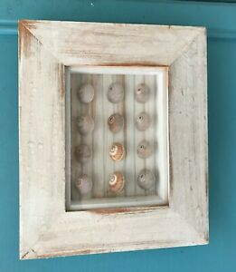 Limewashed Wooden shells 3d Picture ~ Box Frame Decoration