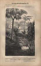 Lithografien 1878: Steinkohlenformation I und II. Steinkohle Kohle Formation
