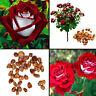 20 stk/pack Rosensamen Rose Samen Rot Weiß Saatgut Samenpflanzen Garten Sam E4P9