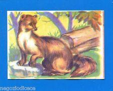 ANIMALI - Lampo 1964 - Figurina-Sticker n. 82 - FAINA -New