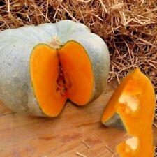 Pumpkin seeds Volga gray mid-ripe vegetable organic from Ukraine BIG PACK 20 gr