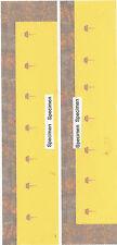 vitrage pour voitures Flêche d'or - Glazing for Golden Arrow Pullmans