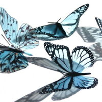 12 Pack Butterflies - Baby Blue- 5 to 6 cm - Topper, Weddings, Crafts, Cards,