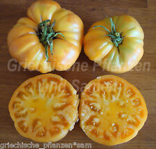 🔥 🍅 papá's Sunset tomate Orange * tomate m. sabor * 10 semillas