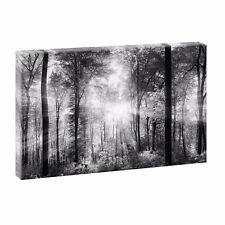 Wald Bild auf Leinwand  Poster Wandbilder Deko Natur XXL 120 cm*80 cm 729 sw