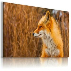 FOX WILD Animals Canvas Wall Art Picture Large AN84 MATAGA UNFRAMED-ROLLED
