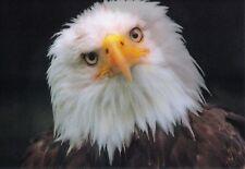 Lenticulares-wackelkarte: águila gira su cabeza-pronto Eagle
