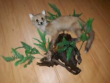 BEAUTIFUL New Red Fox Taxidermy Hunting, Collectible Animal stuffed