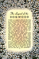 The LEGEND Of The DOGWOOD   White Flowers   c1940's Linen Postcard