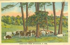 Hitchcock, SD Cows in the Shade 1944 Greetings from Hitchcock
